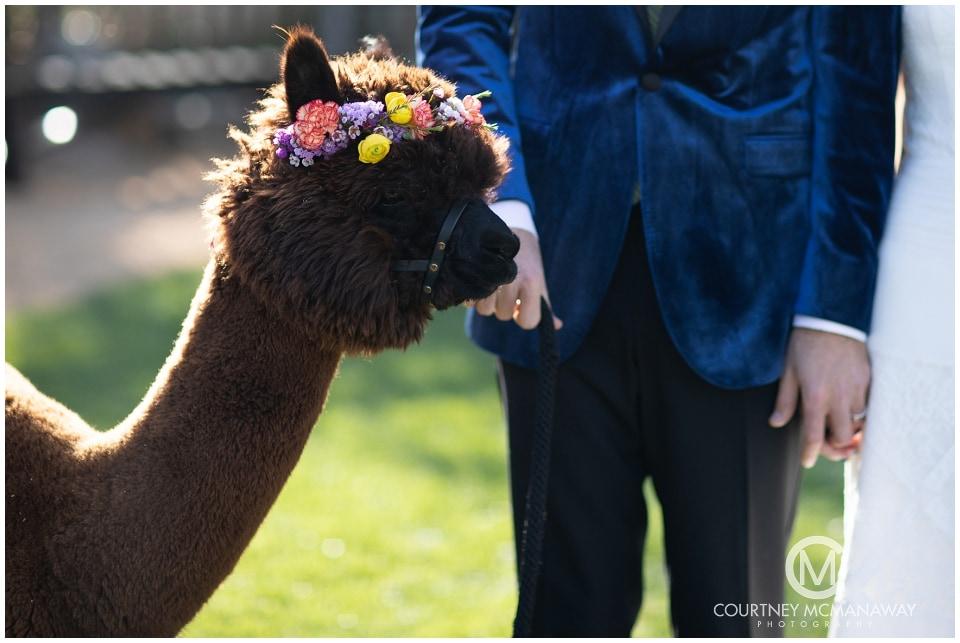 boho-wedding-inspiration-alpaca-forever-and-always-farm