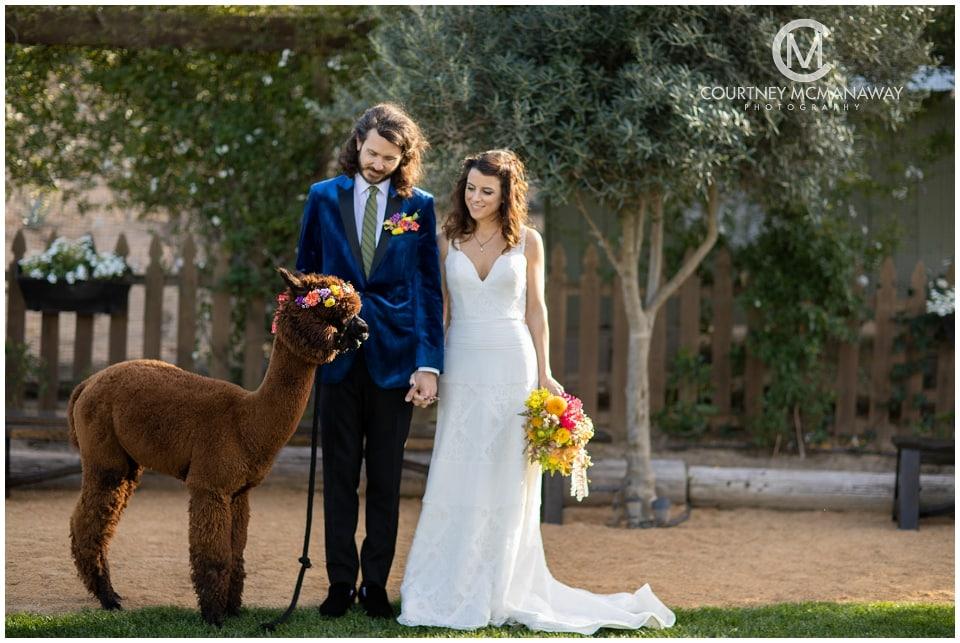 boho-wedding-couple-with-alpacas